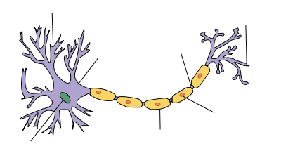 Schema eines Neurons - Creative Commons Attribution Share Alike 3.0 - Quelle: https://en.wikipedia.org/wiki/File:Neuron-no_labels2.png